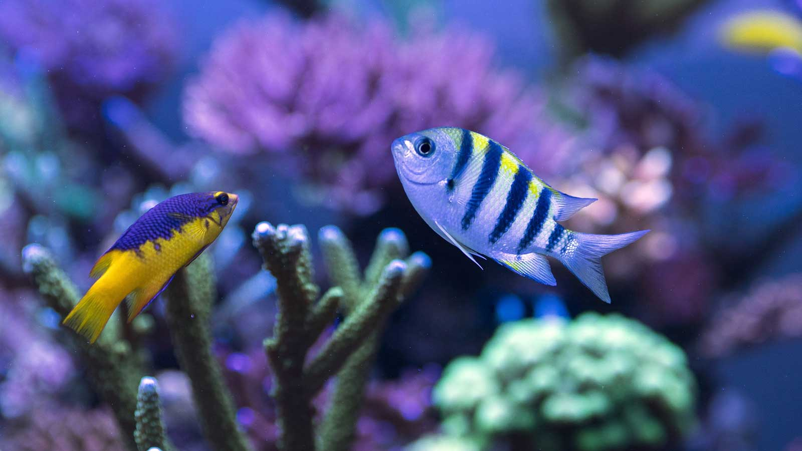 best lighting for fish color