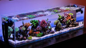 Good nano reef lighting