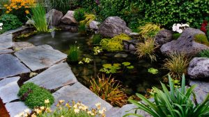 Fish pond landscape