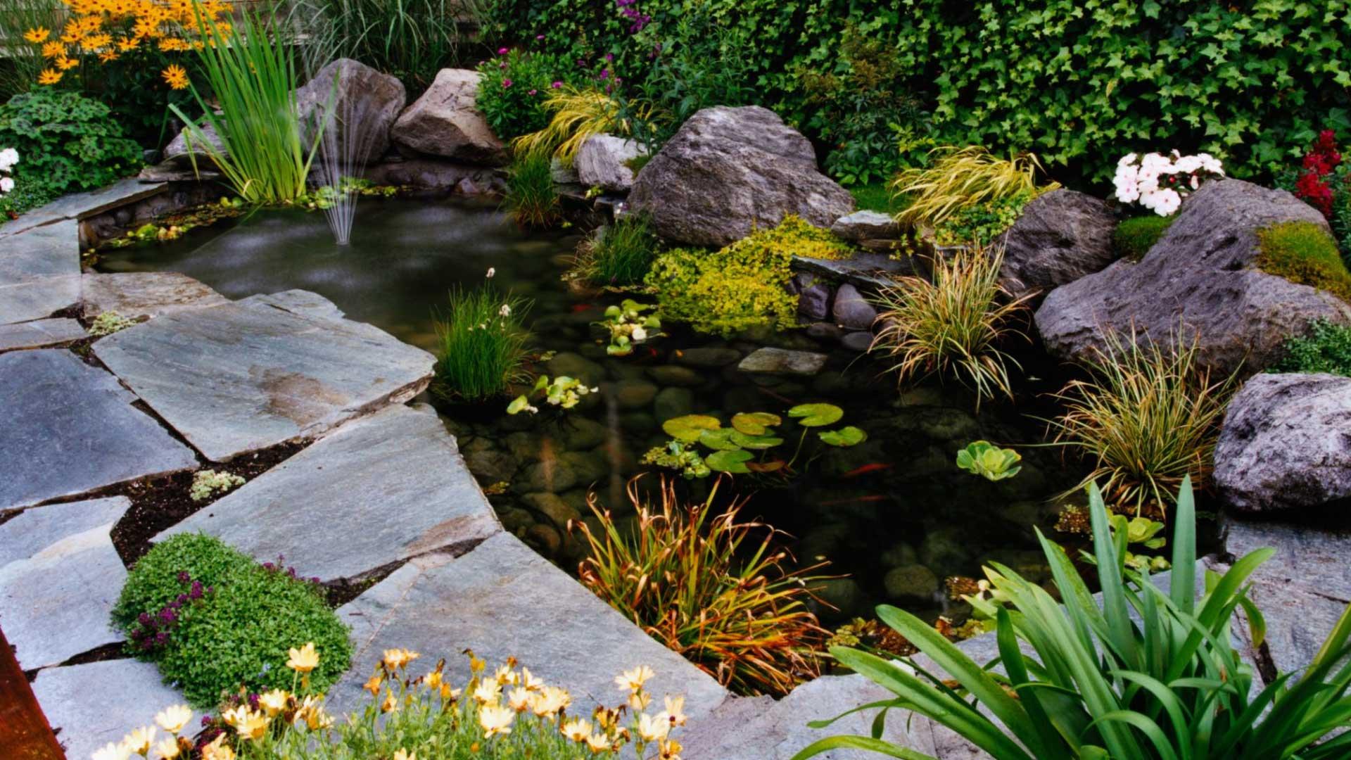Fish pond landscape