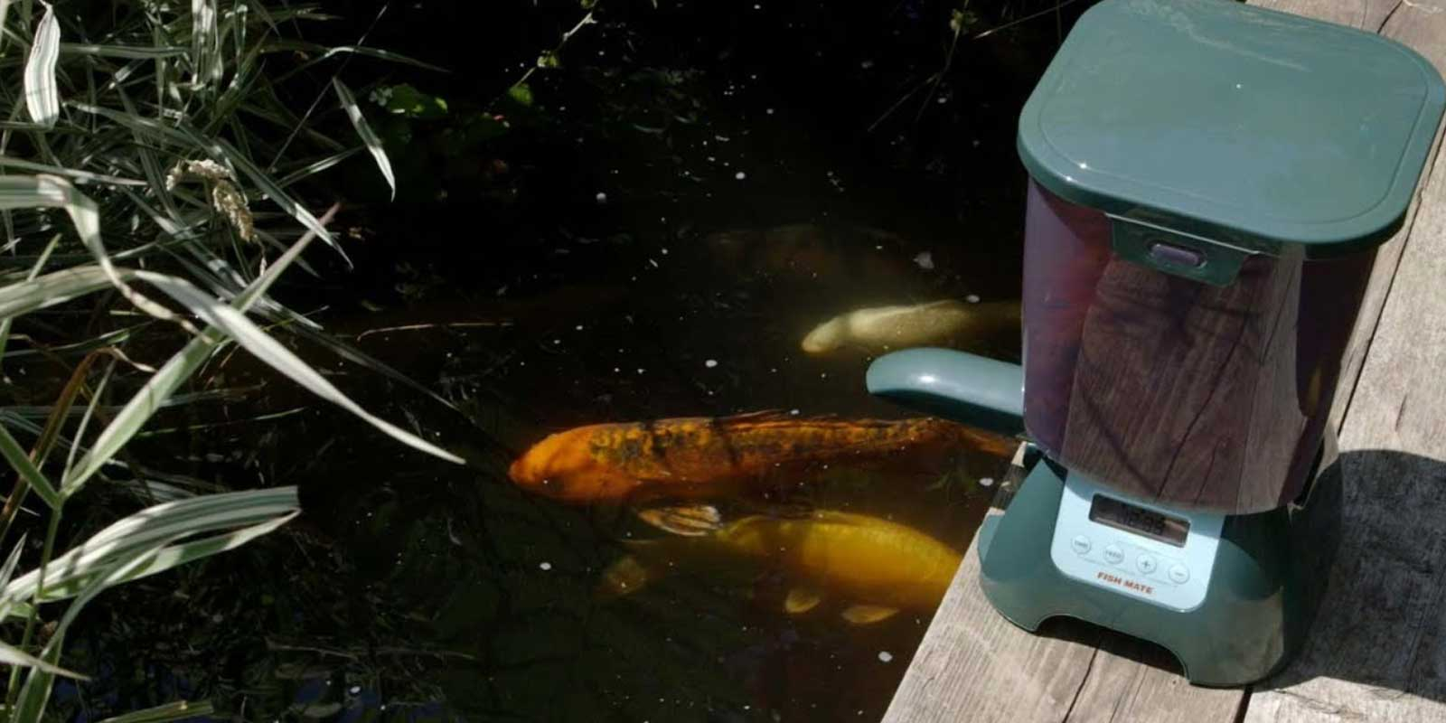 koi pond with feeder