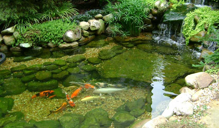 koi pond with sand gravel