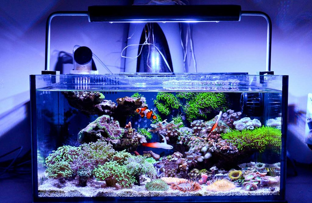 Nano reef tank with corals and fish