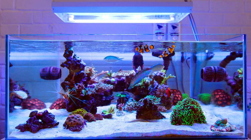 Nano reef tank lighting types