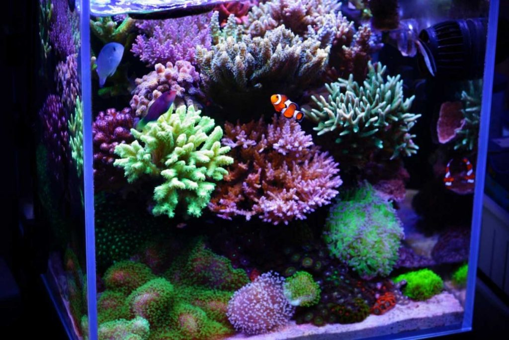 Nano reef tank with clown fish