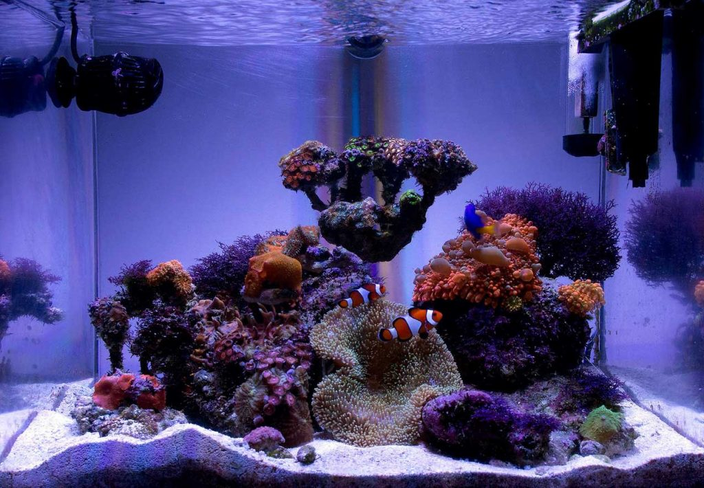 Nano reef with clown fish