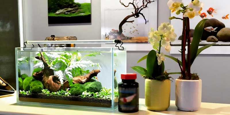 Desktop fish tank