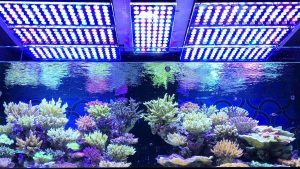 Reef tank with led lights for corals and fish