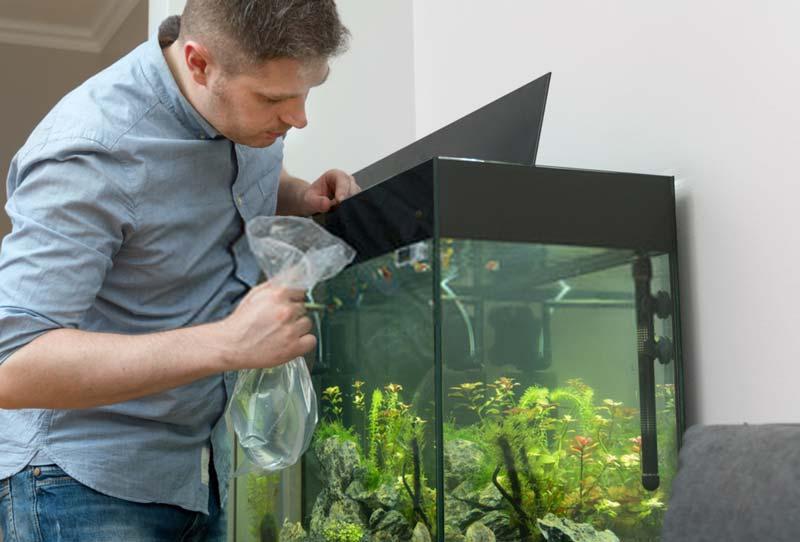 Introducing new aquarium fish