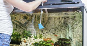 Cleaning aquarium glass with scraper